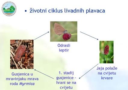 zovje26